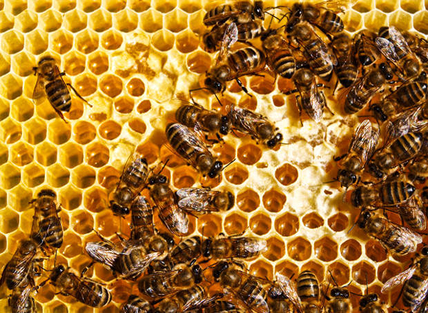 Hive mentality: using open source research to develop diagnostic solutions