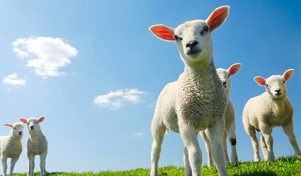 Dolly the sheep: the demise of biotechnology patents