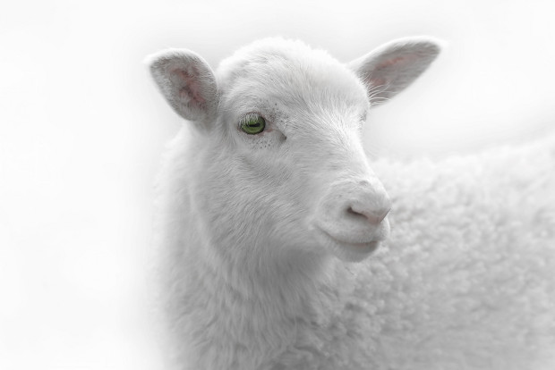 Federal Circuit refuses to review Dolly the sheep ruling