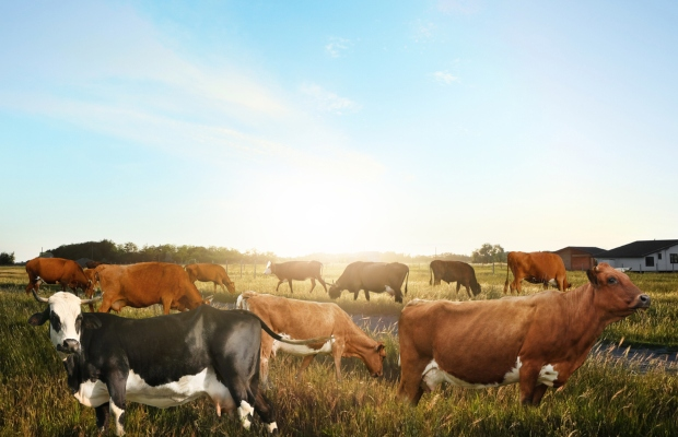 Australian court rejects cattle genome patent appeal